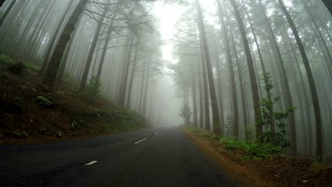 Fog on a country road - Video footage of a POV car trip, drivers view. Foggy forest