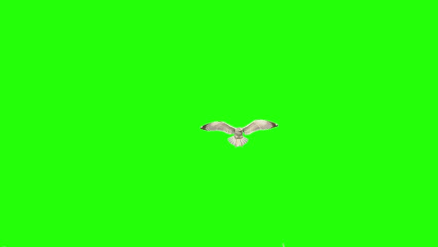 Ultra slow motion of a sea gull landing in the middle of frame and flying away. Shot 100 fps with red dragon camera. Version 3
