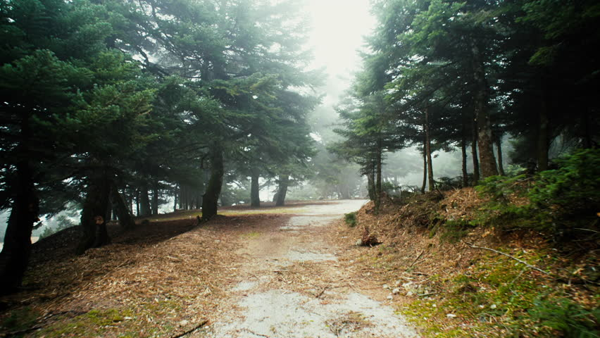 HD Trekking/walking on mountain forest dirt path at winter.Stabilized/gimbal pov shot of someone walking through a beautiful mountain forest dirt road/path | Shutterstock HD Video #13616243