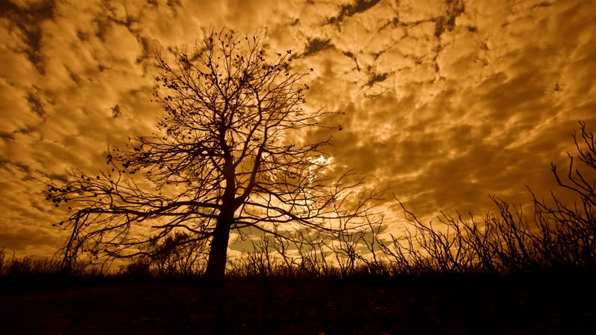 Site of fire the day after with the burnt tree and the nature and the clouds passing