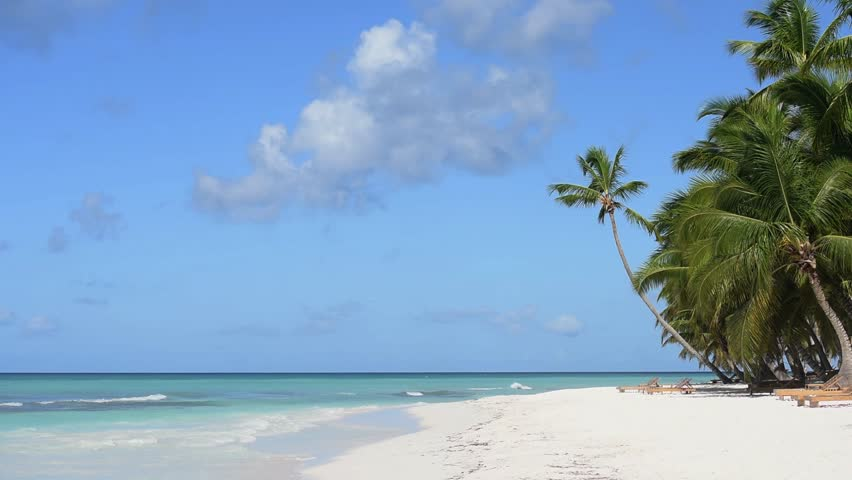 Palm trees beach white sand | Shutterstock HD Video #14308702