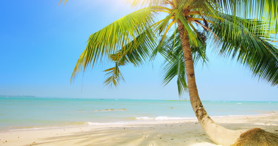 Hd Tropical Island Beach Paradise Wallpapers And Backgrounds: Palm Tree On Sandy Beach At Clear Sunny Summer Day