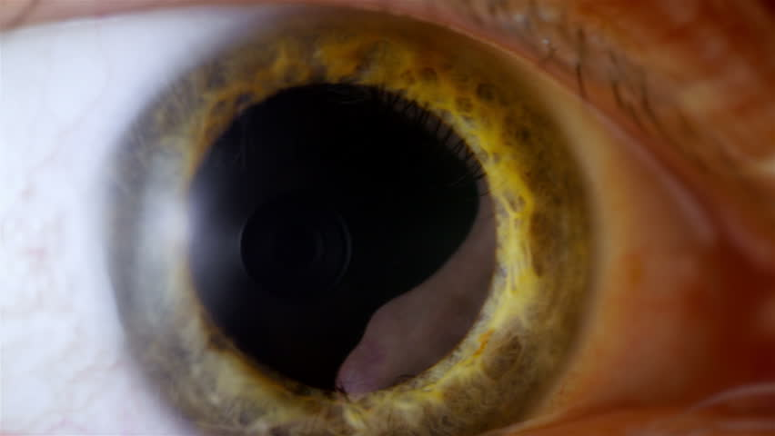 Human eye iris contracting. Extreme close up.  #14396902