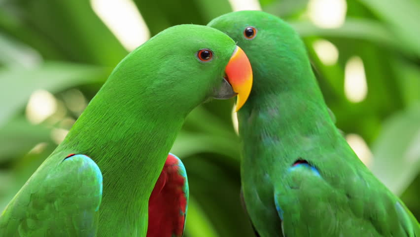 Any One 1 6 Jaeger Birds Hd Wallpapers: Kakadu Stock Footage Video