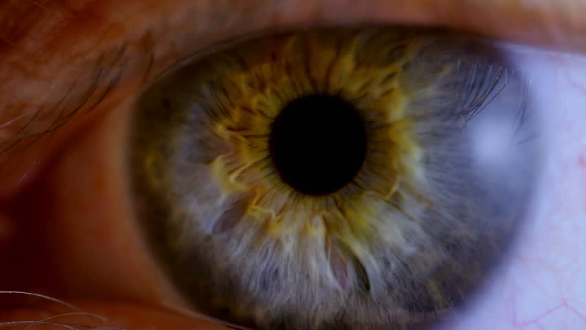 Human eye iris contracting. Extreme close up.  #14563342