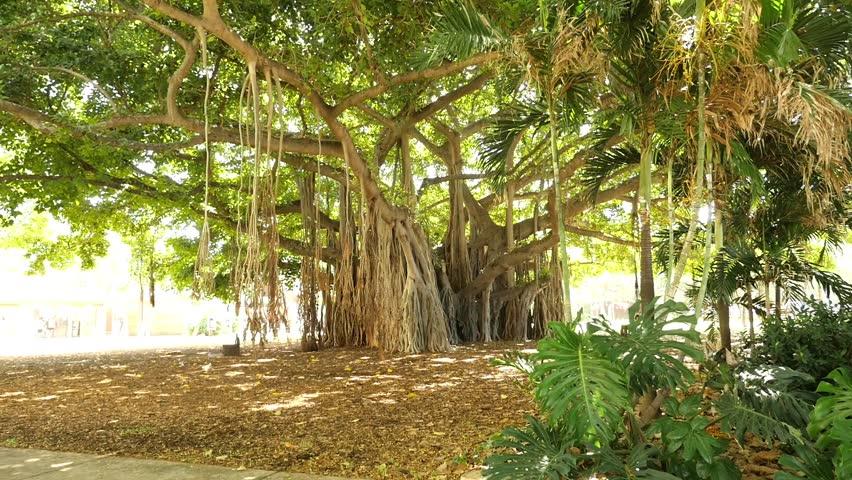 Banyan tree stock price