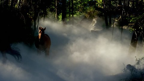 Horses galloping in roundup on Dude Ranch with Cowboy Riders
