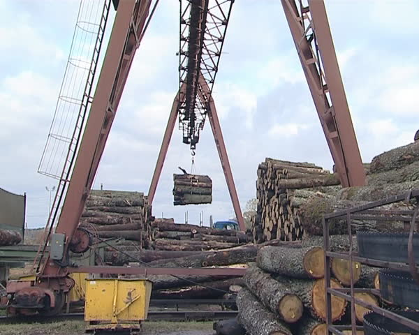 Unloading logs from the machines. Wood processing and industry.