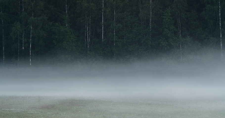 Time lapse of morning fog flowing on a field in front of a forest | Shutterstock HD Video #15117862