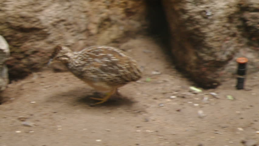 Header of kiwi