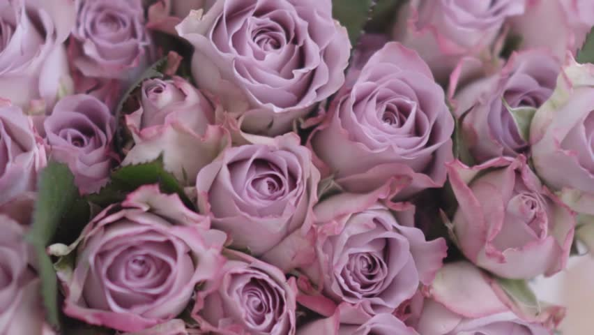 Gorgeous Pink Flowers Hd Stock Video Clip