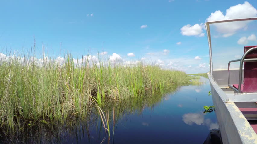 Airboat tour in beautiful Everglades swamp wilderness, touristic attraction in Miami, South Florida