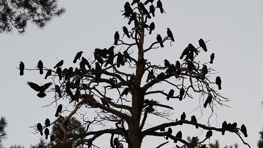 Image result for flock birds sitting tree