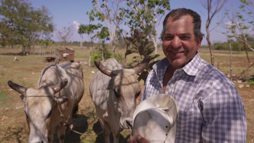 Farming and cultivations in Latin America. Portrait of middle aged hispanic farmer standing proud with plough and ox in background. He looks at the camera and smiles happy. Steadicam shot