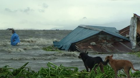 MANILA, PHILIPPINES - OCTOBER 2009: Storm Surge Flood Water Inundates Shanty Houses And Man As Dogs Look On.