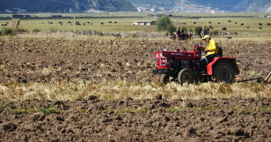 Oct 12,2015:4k tibetan people use farm tractor Arable land in shangrila yunnan,china. gh2_10397_4k