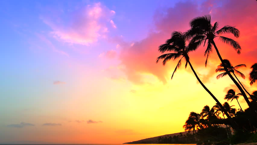 4K Incredible Sunset Tropical Beach Palm Tree Landscape Background Stock Footage Video 15772012