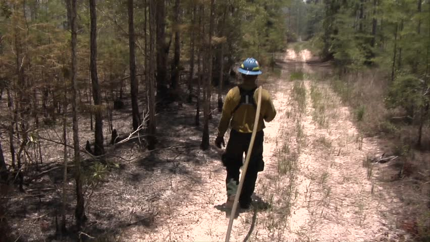 Wildland firefighters walks with a hose from the swamp buggy fire truck during a prescribed fire in the Florida Everglades
