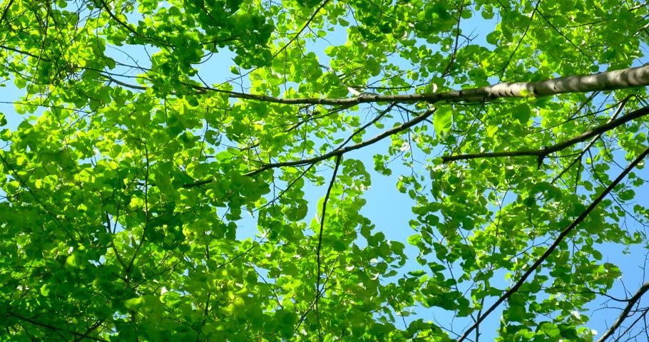 evergreen tree bark background - photo #27