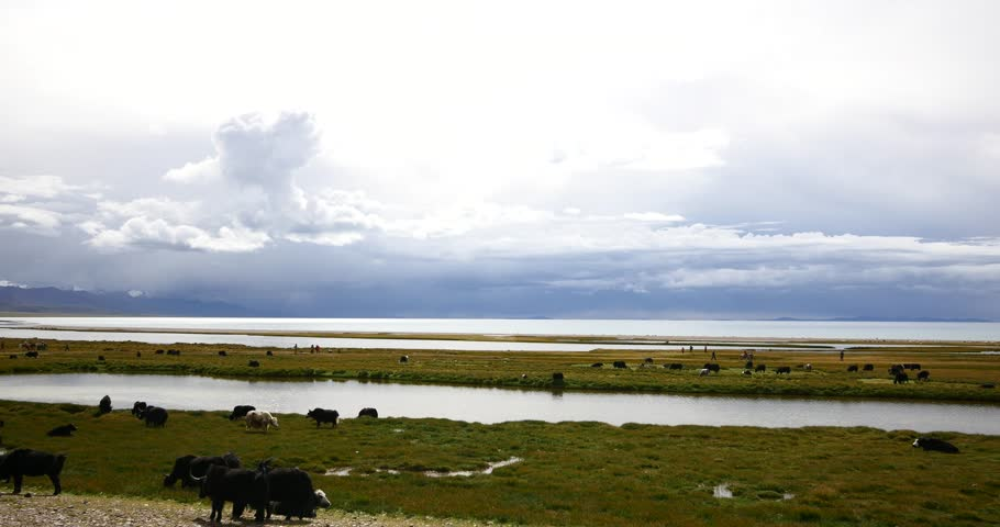 4k huge clouds mass rolling over lake namtso,tibet mansarovar,herdsman tent,a group of cow,Tibet's second largest lake,is the third largest saltwater lake in China.roof of the World. gh2_09254_4k