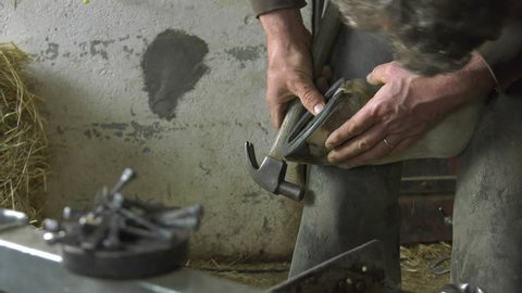 a craftsman farrier replace horseshoes/the farrier finishes fixing the horseshoe