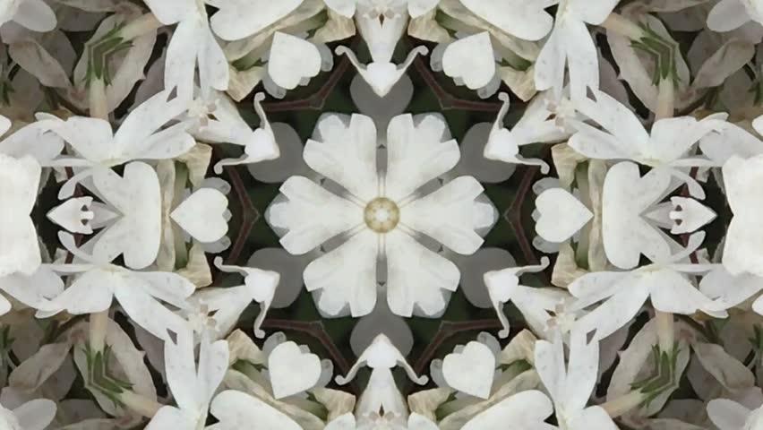 kaleidoscope flower