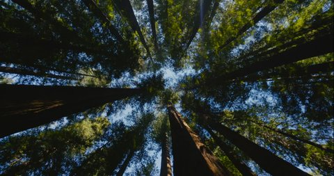 4K spinning underneath tall redwood trees. Humboldt Redwoods State Park in Northern California. Camera spins around 360 degrees while looking up in a forest.