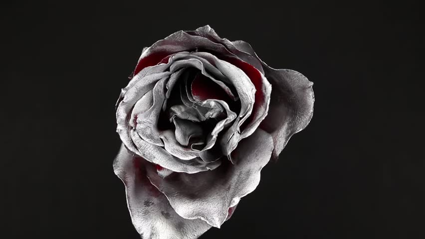 Slowly Revolving Silver Rose Flower With Black Background