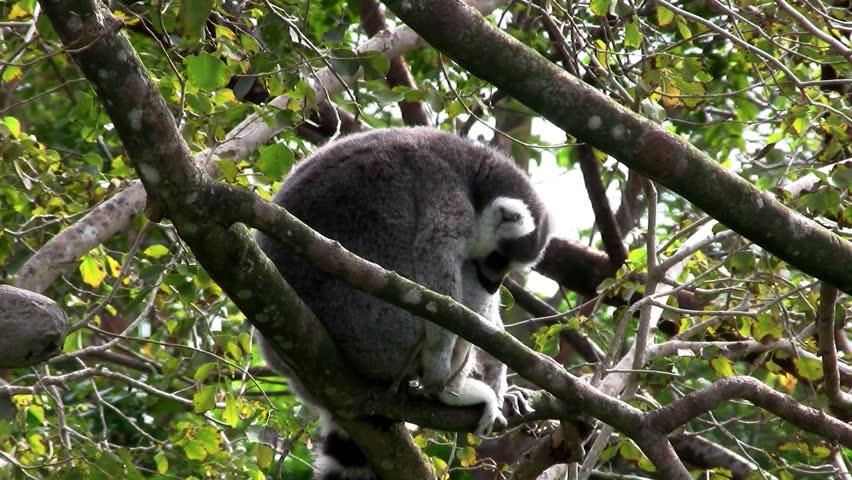 An animal on a branch | Shutterstock HD Video #1656712