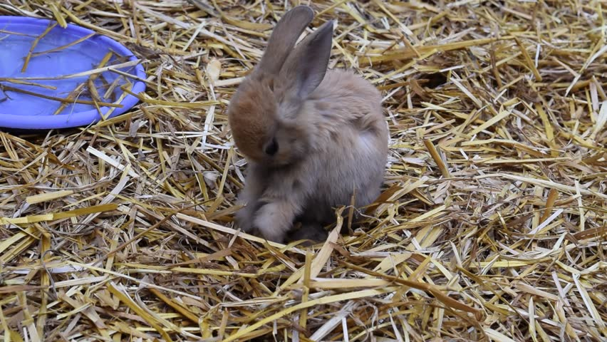 Young rabbit to lick one's and to ramp. Footage | Shutterstock HD Video #16580347