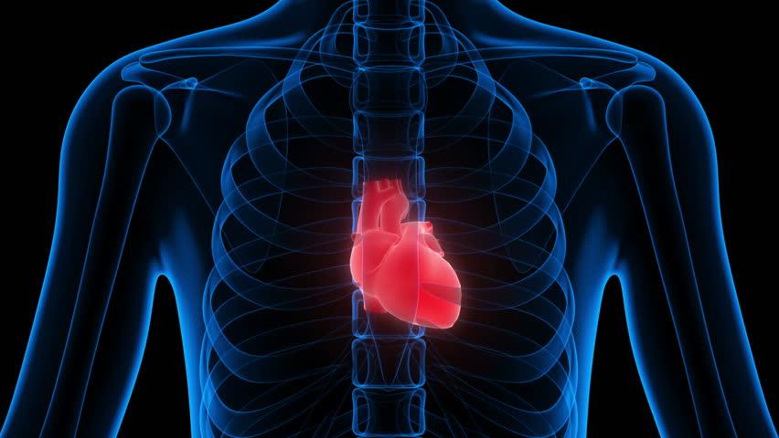 Stock Video Of Human Body Organs Heart 3d 16611982 Shutterstock