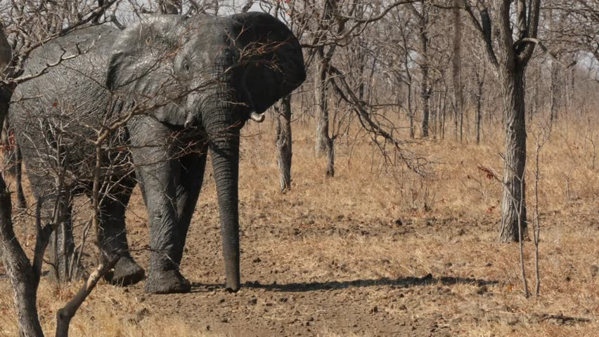 Elephants legs propel them around just like a 4x4  Daily