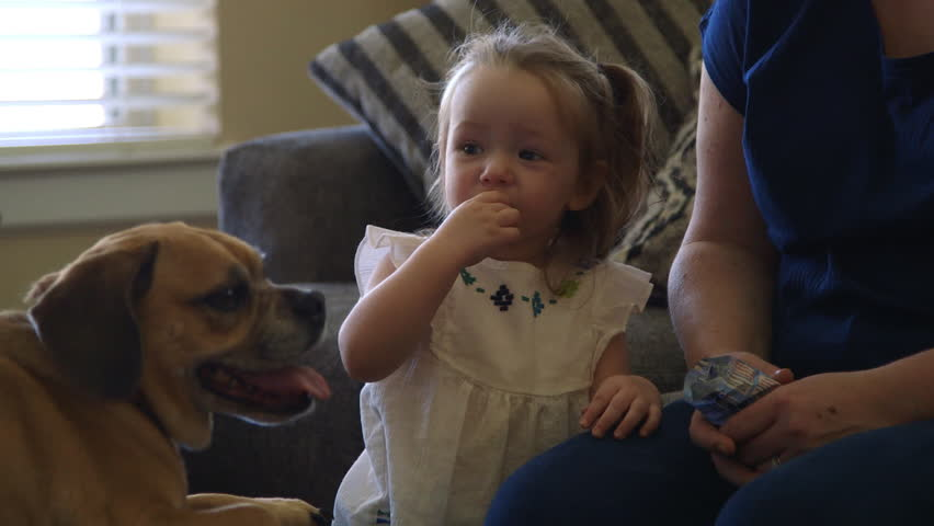 Cute toddler enjoys treat while giving well behaved family dog some affection as it gladly rests on ottoman after long walk. | Shutterstock HD Video #16647592