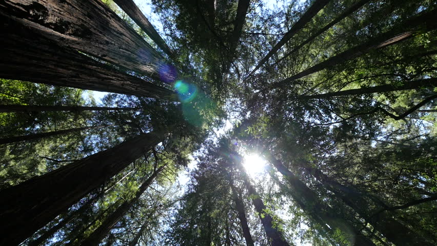 Forest trees and sunlight dolly moving low angle shot | Shutterstock HD Video #16767682