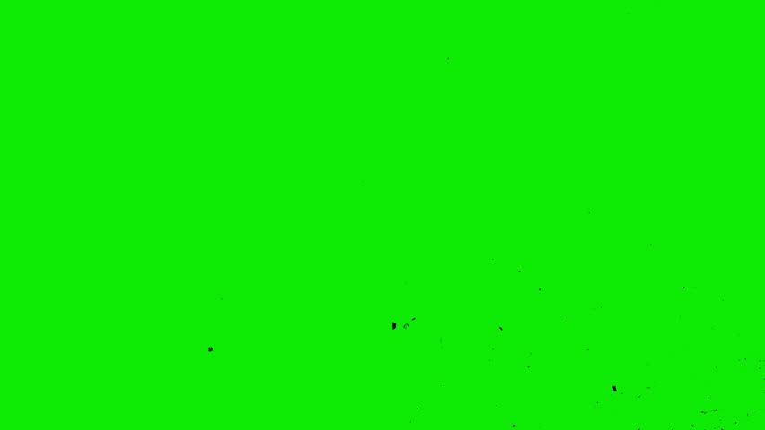 Pigeons flying against green screen chroma key stock - Plain green background ...