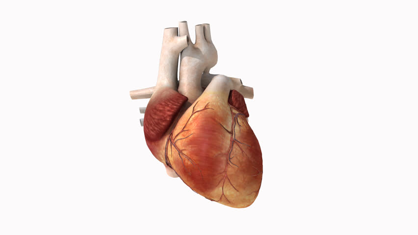 Animated human heart - photo#37