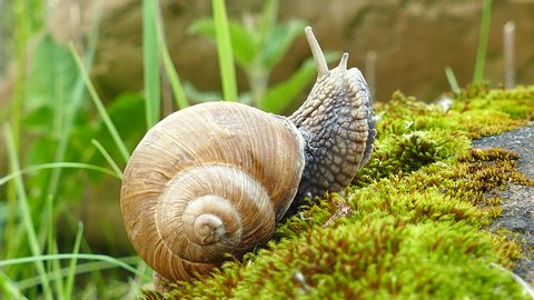 4K shot. Life of snails, realtime.
