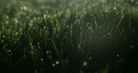 Wet grass at night on soccer field lit from behind
