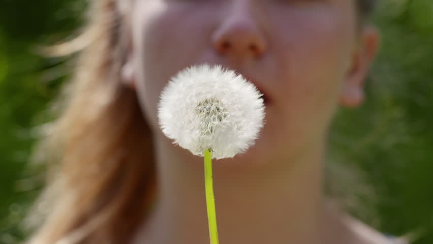 Teen Girl Blowing White Dandelion Stock Footage Video 100 Royalty