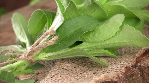 Stevia leaves  (not loopable; 4K)