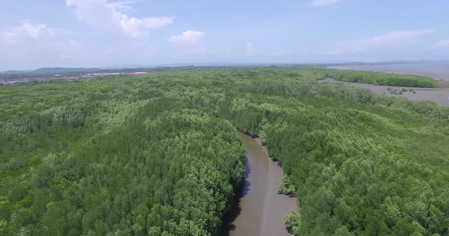 Aerial View: Mangrove forest in Rayong province, Thailand.   Shutterstock HD Video #17296852