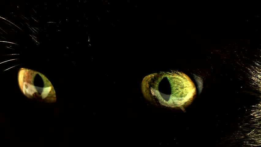 close up of cat's eyes