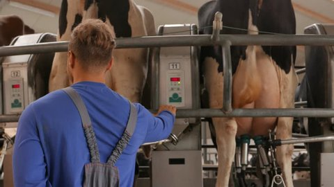 Cow milking facility and mechanized milking equipment in 4k UHD video.