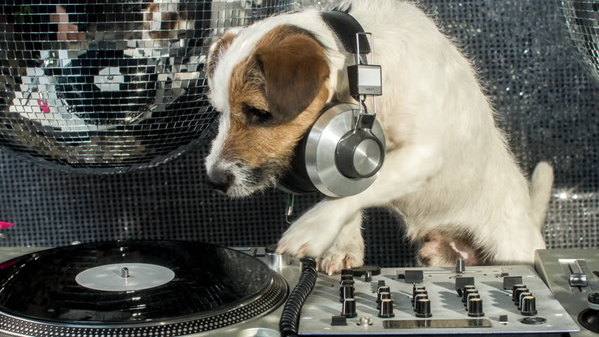 dj dog is in the stock footage video  100  royalty