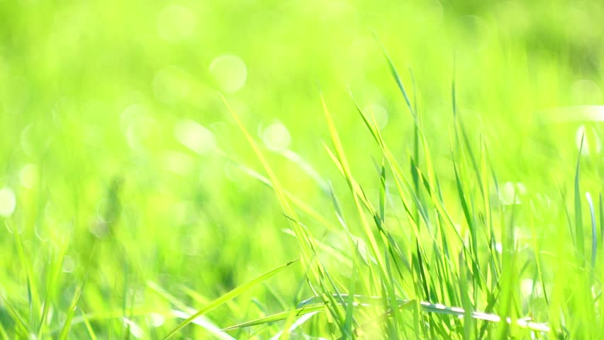 beautiful green grass background | collection 7+ wallpapers, Powerpoint templates