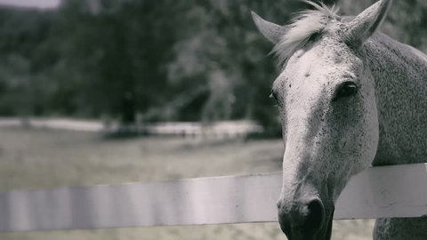 close up of the face of a horse moving her mouth from side to side over the fence in slow motion 120 fps in 4K resolution and 4:2:2 color space - film look, desaturated - Leica SL
