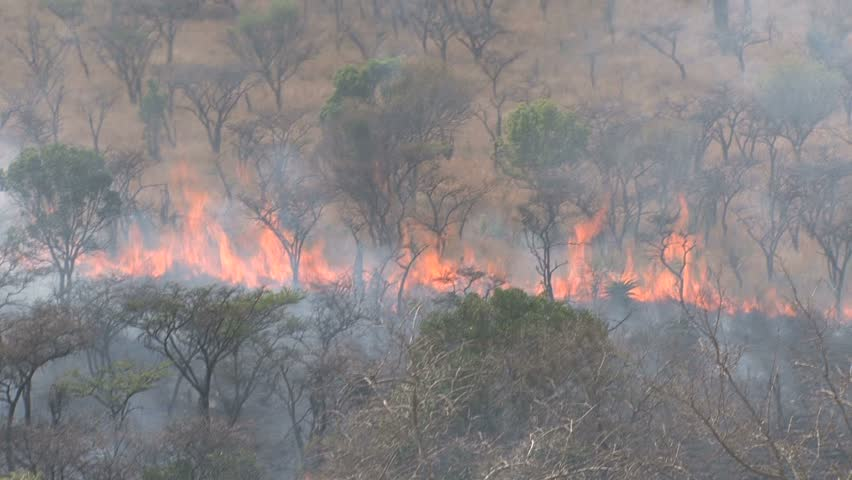 Natural Disasters In African Savanna