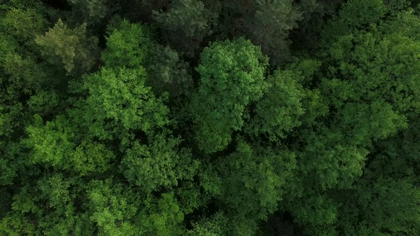 4K HD Aerial view camera moves rising up from green forest of dense mixed tree tops of pine trees and birches | Shutterstock HD Video #17937022