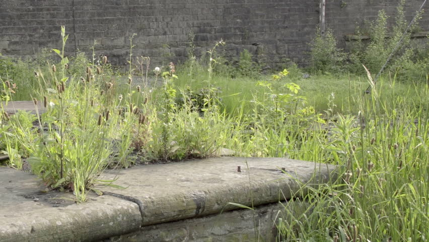 Urban town decay establishing shot HD stock footage. Weeds left to overgrow in an un kept part of town depicting urban decay. #17937802