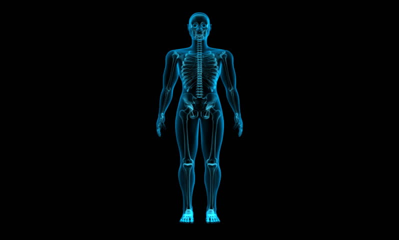x-ray scan of human skeleton hd stock footage video 1762700, Skeleton